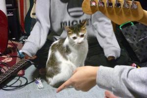 バンド 猫