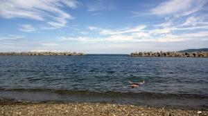 海水浴2017